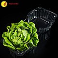 Clamshell lettuce packaging boxes